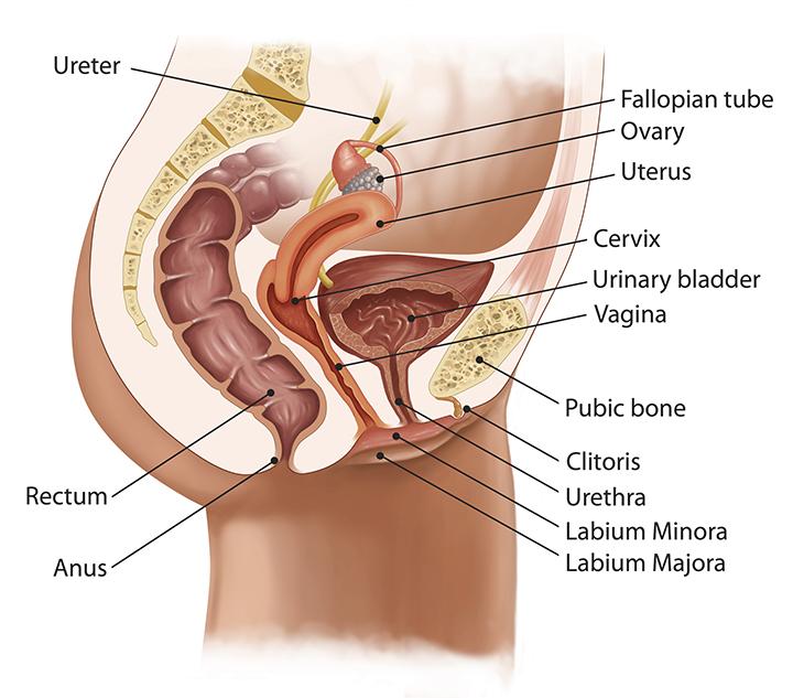 pelvic prolapse